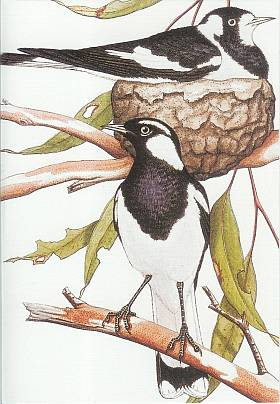 WA_Card_Magpie-lark Sales Order Form Books on church bake, free blank printable, sample bake,