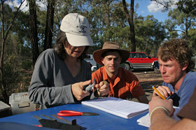 Bird banding project in Victoria