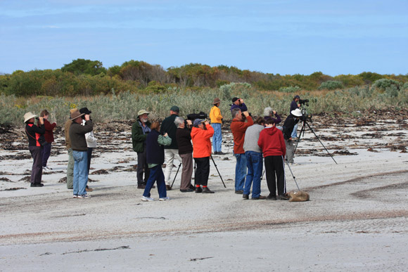 Shorebirds 2020 workshop